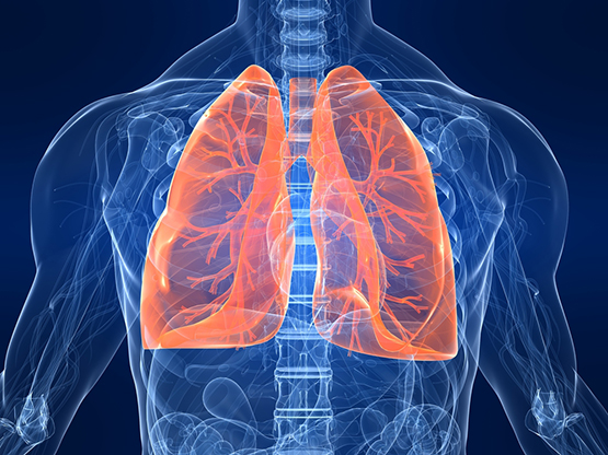 Lungs: Facts, Function and Diseases